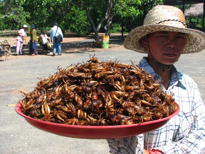 insectesassiette.jpg